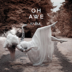 Animi - Oh Awe